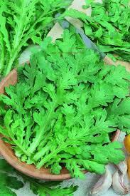 chryzantéma-maiko-1-2