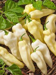 habanero-white