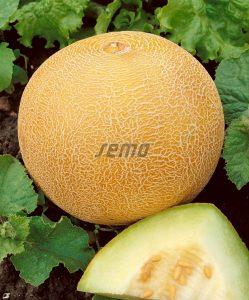 hzecat-4700-semo-zelenina-meloun-cukrovy-solartur