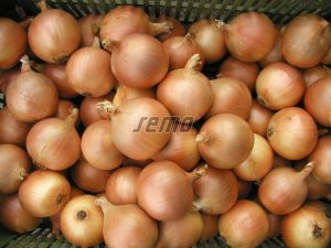 p0529-semo-zelenina-cibule-kuchynska-lusy