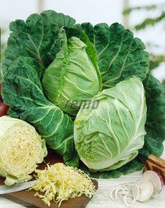 p1401-semo-zelenina-kapusta-hlavkova-predzvest