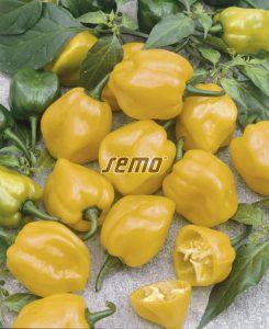 p2556-semo-vegetable-pepper-hot-habanero-lemon