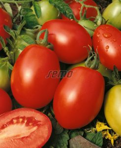 p3142-semo-zelenina-rajce-kerickove-orbit
