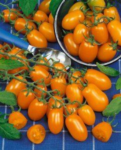 p3271-semo-zelenina-rajce-tyckove-datlo-2