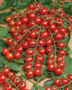 p3275-semo-zelenina-rajce-tyckove-mini