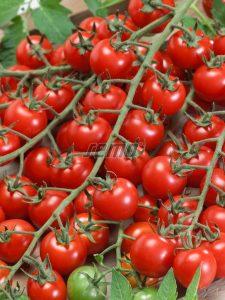 p3276-semo-zelenina-rajce-tyckove-bibi