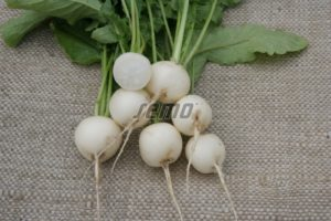 p3408-semo-zelenina-redkvicka-blanka1