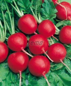 p3410-semo-vegetable-radish-standard-type-saxa