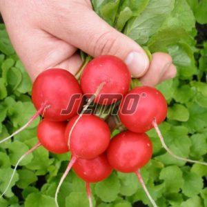 p3442-semo-zelenina-redkvicka-vinara-f1-500x500-1