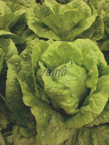 p3891-semo-zelenina-salat-rimsky-gelbus1