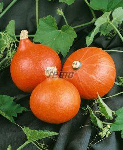 p4075-semo-zelenina-tykev-velkoploda-hokkaido-orange