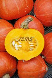 p4078-semo-zelenina-tykev-velkoploda-amoro-f1