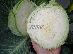 p4206-semo-zelenina-zeli-hlavkove-unikat-f12