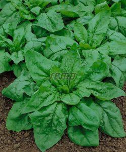 profi-p3901-semo-zelenina-spenat-monores