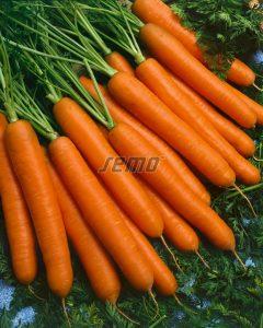 semo-zelenina-mrkva-jarana-f1