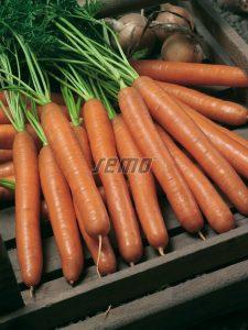 semo-zelenina-mrkva-obecna-jolana2