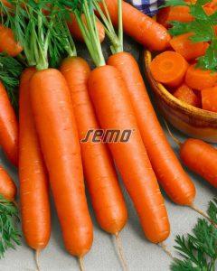 semo-zelenina-mrkva-obecna-kraska2