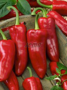 semo-zelenina-paprika-rocná-radmila2