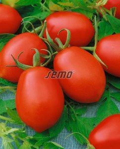 semo-zelenina-rajčina-kríčková-denar2