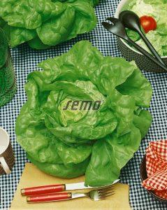semo-zelenina-salat-hlavkovy-humil2